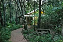Secluded rainforest open plan cabin